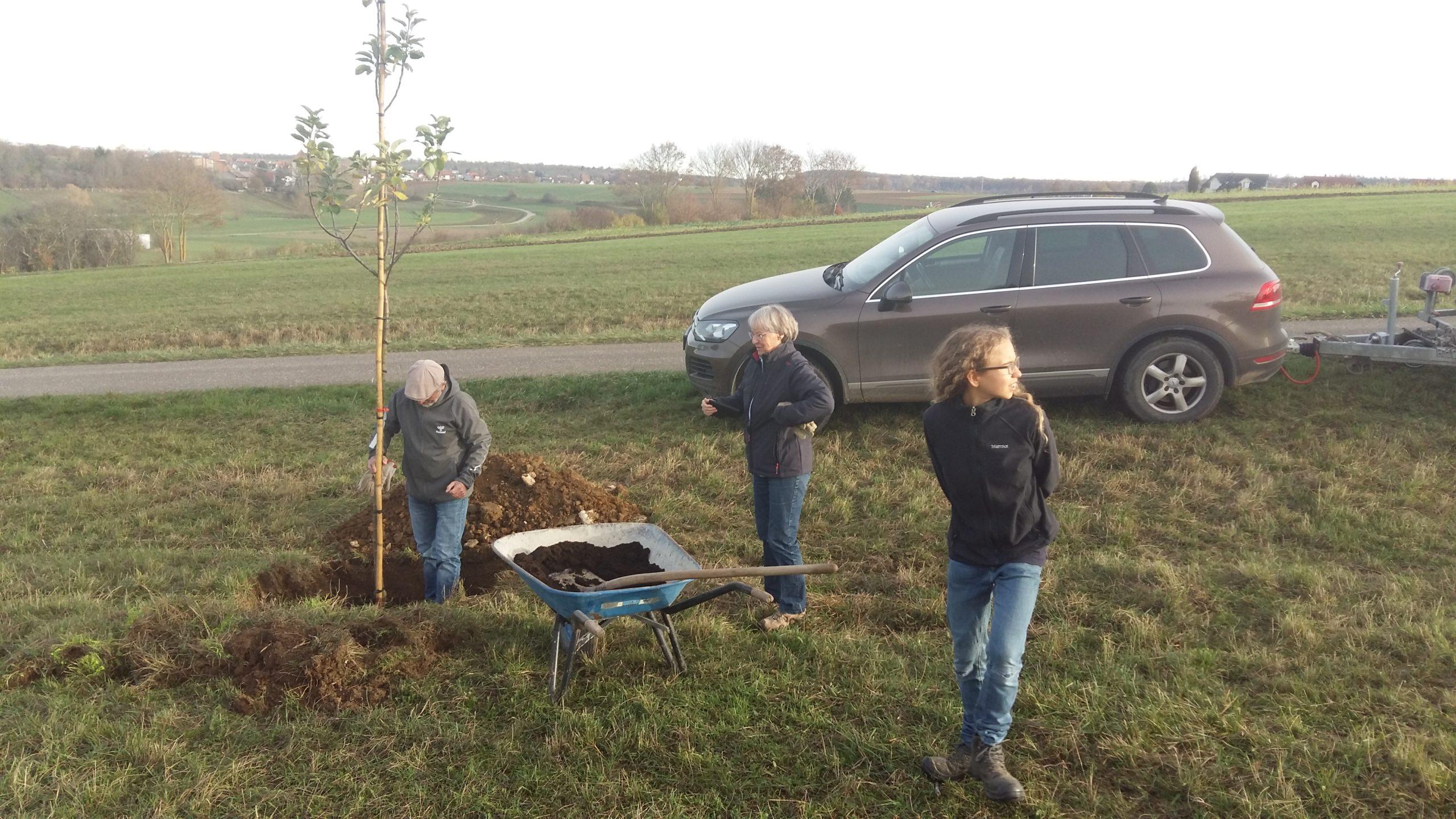 Baumpflanzaktion AK Umwelt – 7 Bäume sind gepflanzt